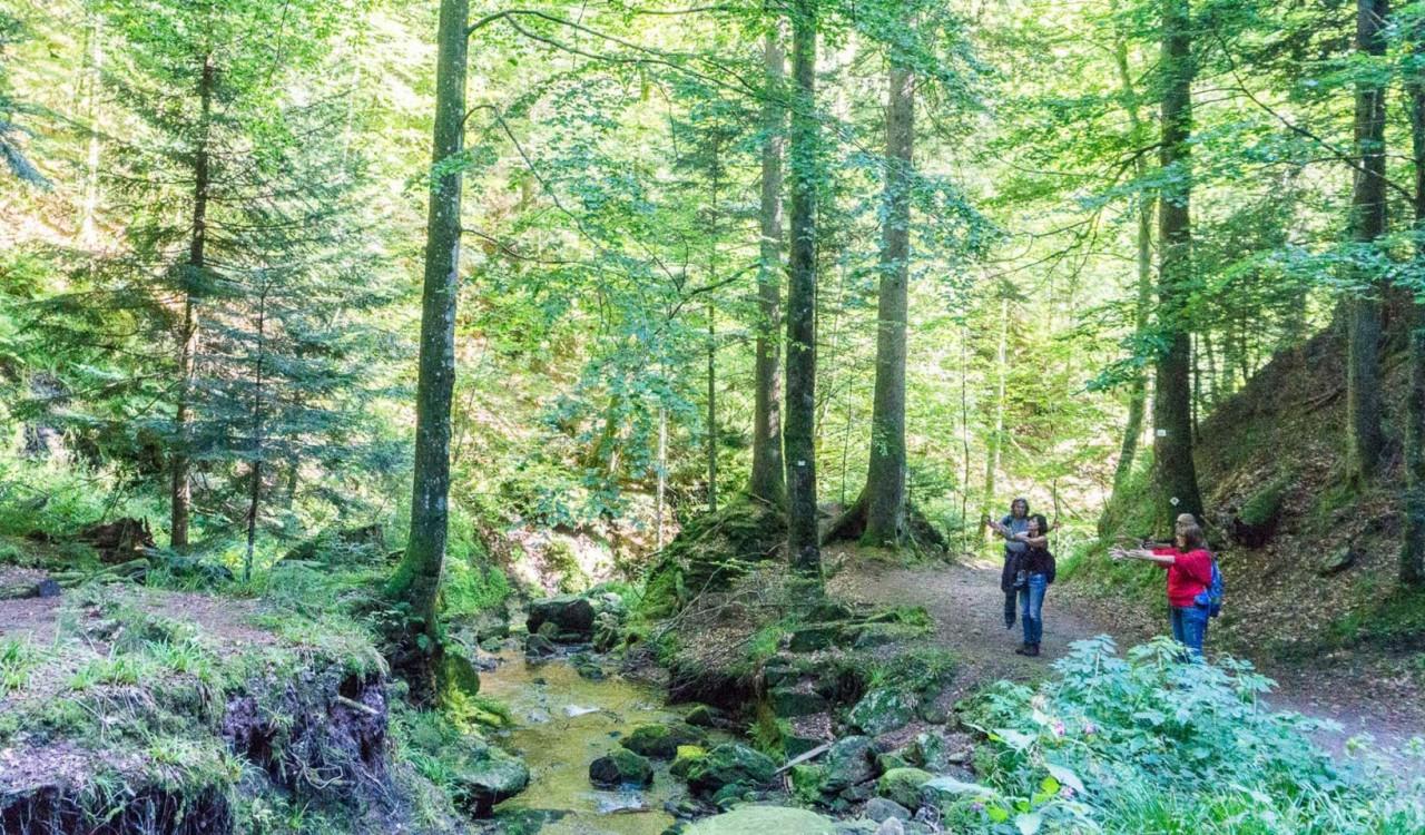 Premium- und Genusswandern in Bad Peterstal-Griesbach:  Ein Rückblick auf das Blogger-Wochenende im Schwarzwald - Tag 1.