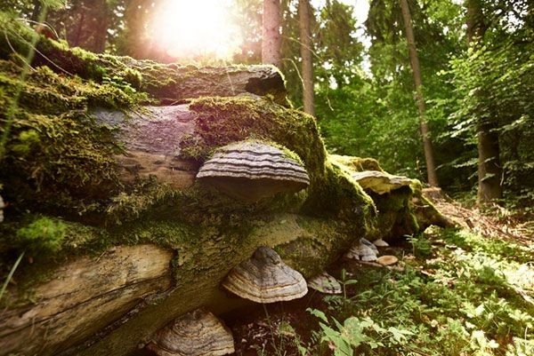Motiv-Wald-verstehen-25