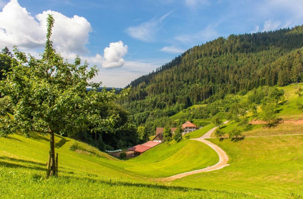 Schwarzwlder-Wandersinfonie_Schwarzwaldsteig_cKTG_Elke-Bitzer-002
